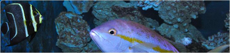 key west aquarium fish tank