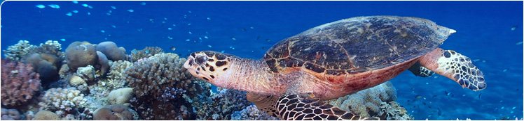 key-west-sea-turtle-conservation