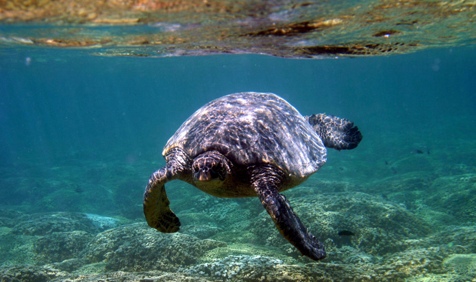 Florida Keys Sea Turtle