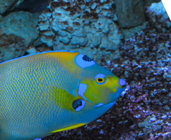 Image of a colorful fish.