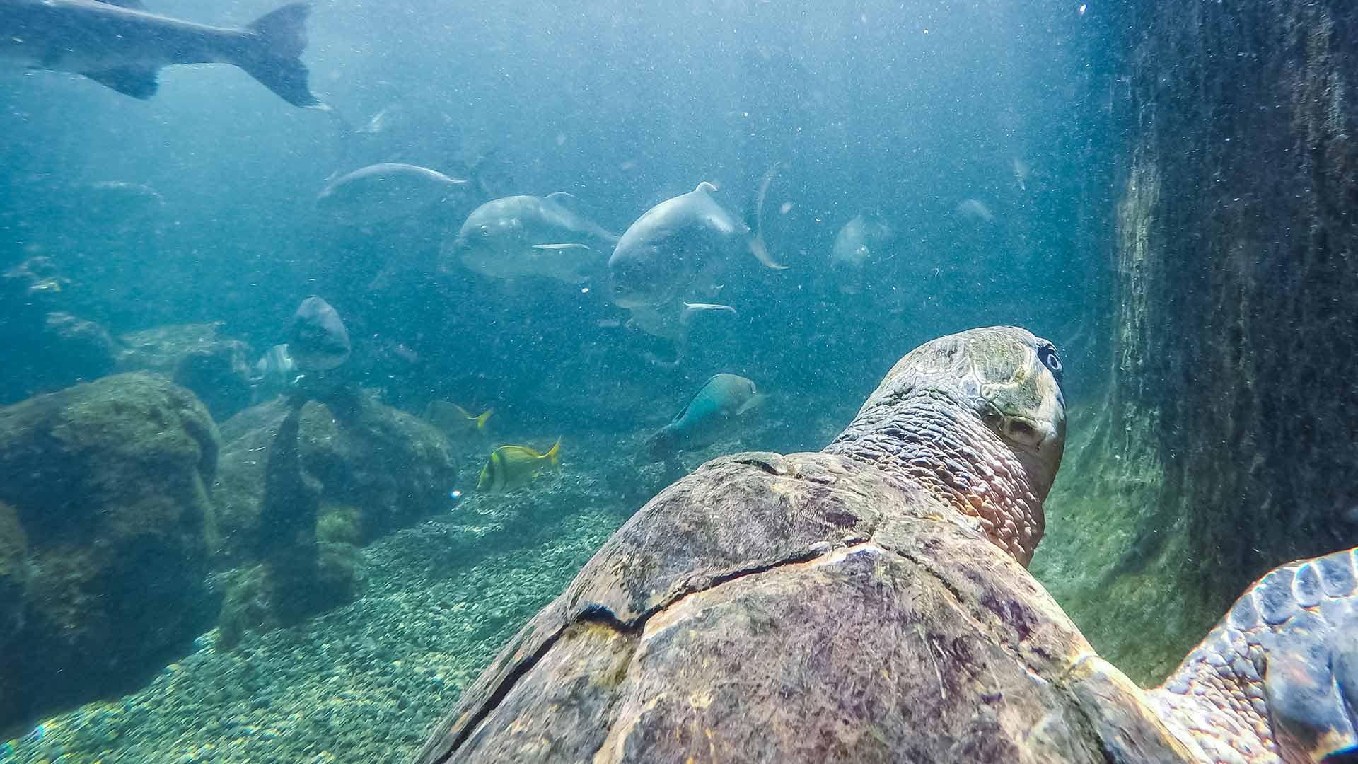 Image of sea turtle swimming