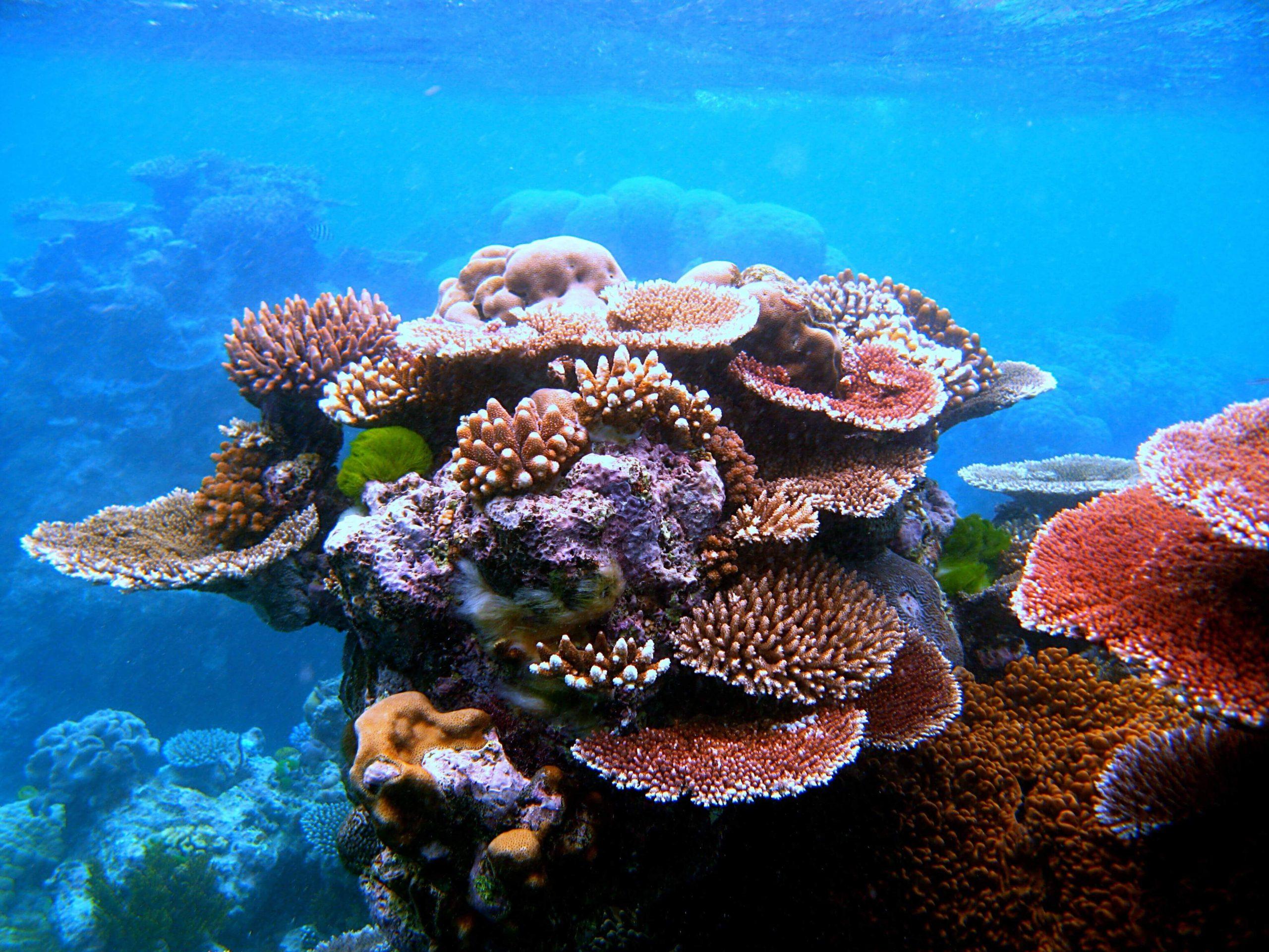 Orange coral reef in the ocean