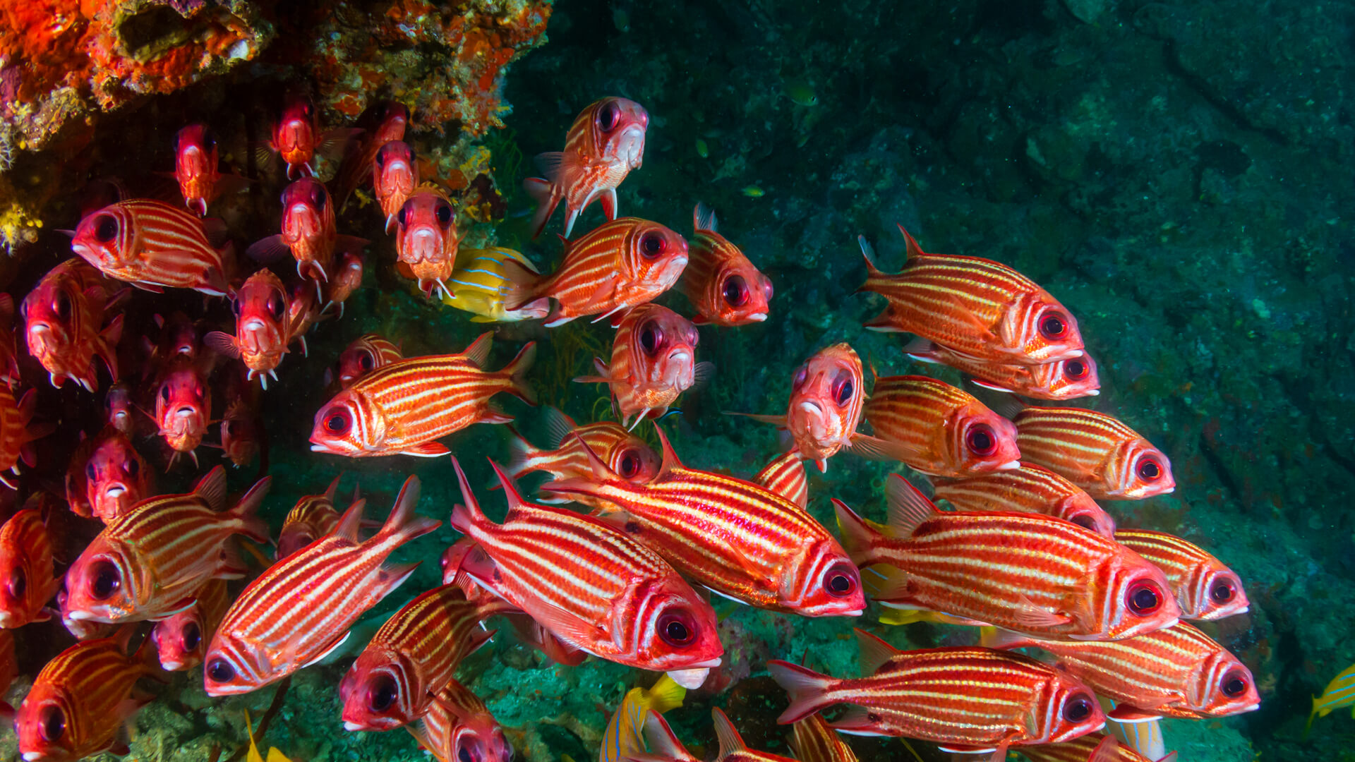 school of squirrel fish in a tropical coral reef