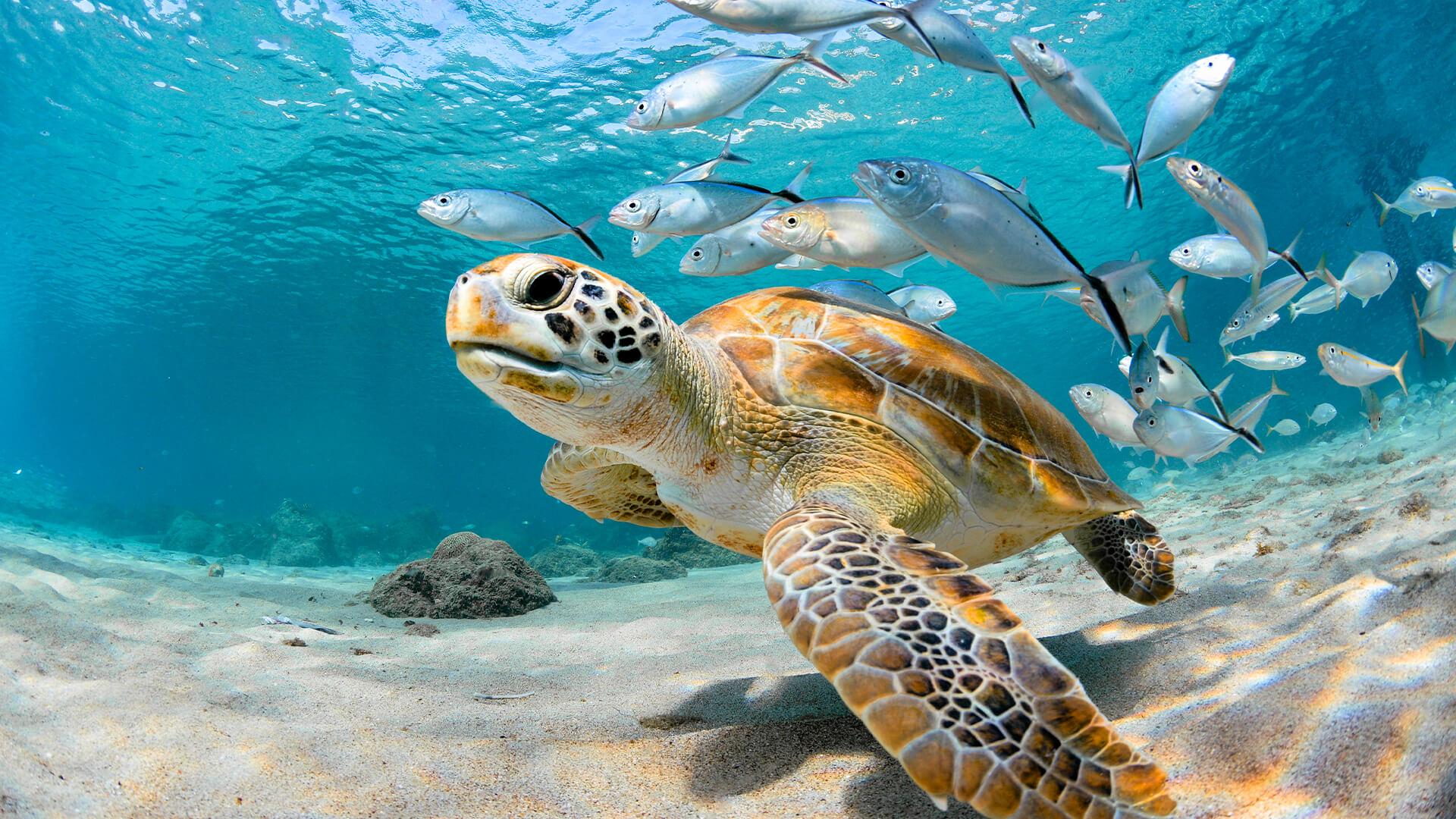 sea turtle underwater at key west aquarium